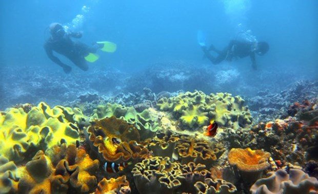 Vietnam's sea accommodates 1,100 sq.km. of coral reefs hinh anh 1