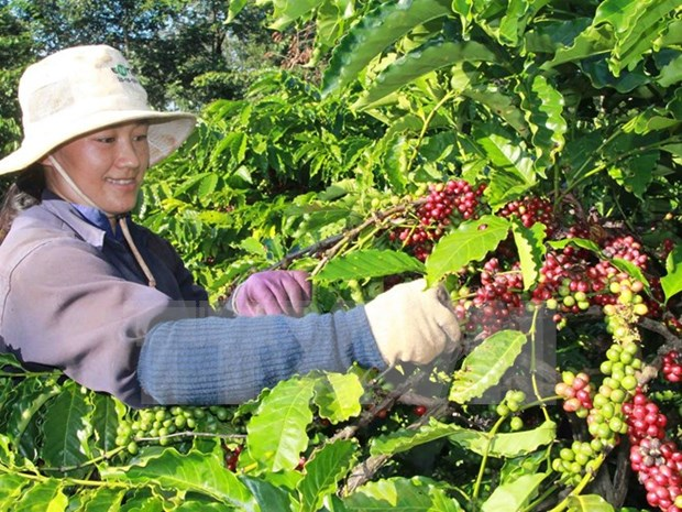 Vietnam targets sustainable agricultural value chain: Minister hinh anh 1