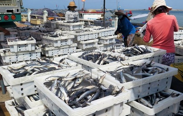 Quang Tri fishermen enjoy good catches in new-year sailings hinh anh 1