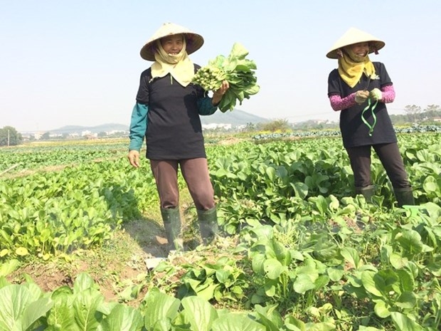Farmers cut Tet holiday to resume production hinh anh 1
