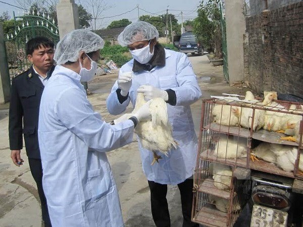 Tay Ninh acts to prevent bird flu spread hinh anh 1