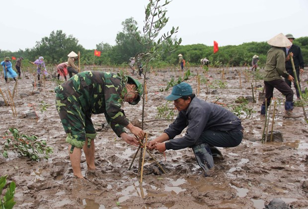 Vietnam stresses wetlands' role in disaster risk reduction hinh anh 1