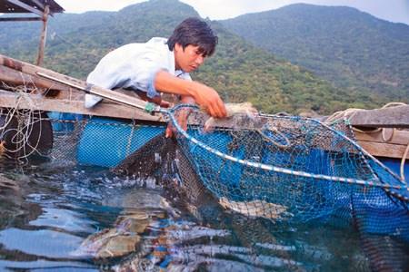 Vietnam's coastal zones boast rich resources hinh anh 1