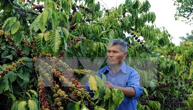 Buon Ma Thuot coffee festival slated for March hinh anh 1