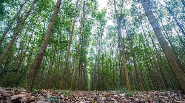 Vietnam sets goals for sustainable forestry development hinh anh 1