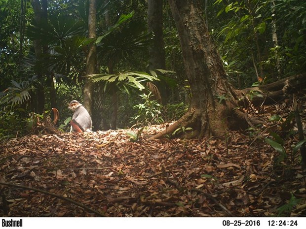 Camera traps snap endangered species hinh anh 1