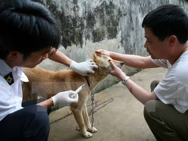 Vietnam moves to eliminate rabies hinh anh 1