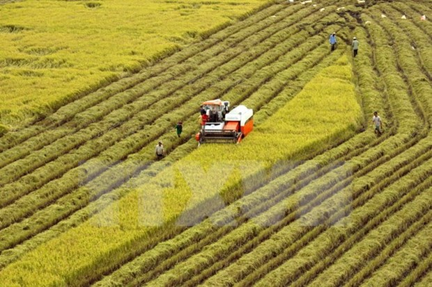 Tra Vinh aims for 10,000 ha of large-scale rice fields in 2020 hinh anh 1