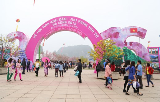 Quang Ninh to hold cherry blossom festival next month hinh anh 1