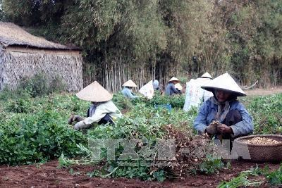 Tra Vinh farmers receive assistance to adapt to climate change hinh anh 1