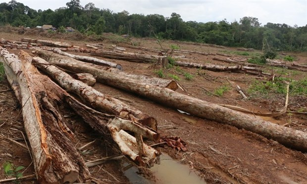 Binh Phuoc authorities apologise for forest destruction hinh anh 1