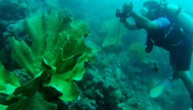 Indonesia, US cooperate in marine habitat conservation hinh anh 1