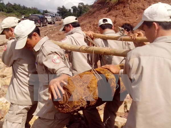 Peace Trees Vietnam hailed for healing war wounds hinh anh 1