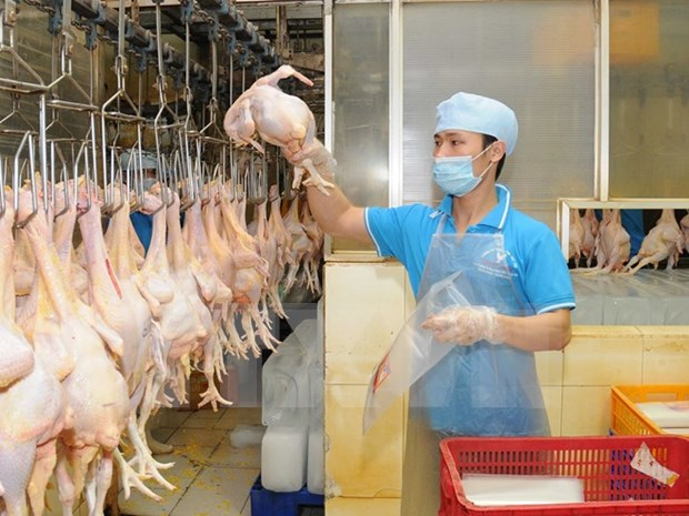 Vietnamese chicken breast to be exported to Japan hinh anh 1