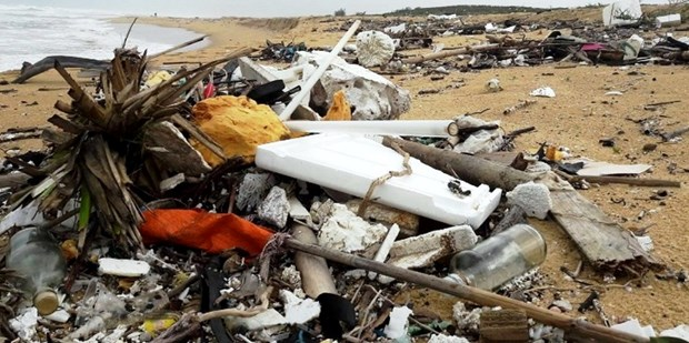 Quang Nam works to tackle coastal oil, rubbish hinh anh 1