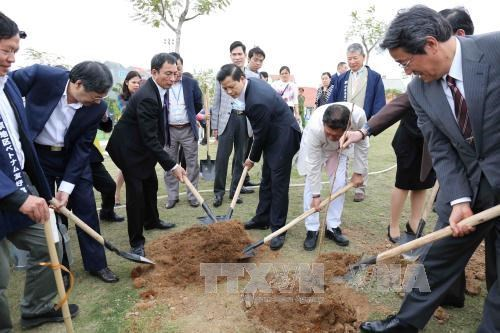 Japanese-presented cherry trees planted in Bac Ninh hinh anh 1
