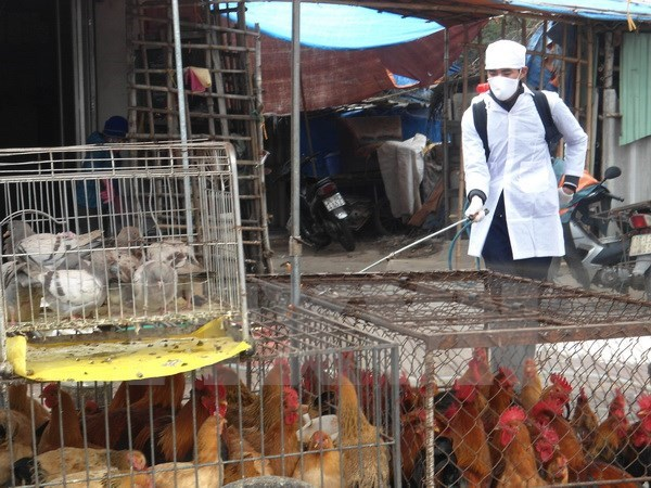 Quang Ninh strengthens border inspection given China's H7N9 outbreak hinh anh 1