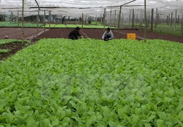 RoK helps Quang Tri develop organic farming hinh anh 1