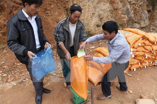 Over 14,000 tonnes of rice provided for the needy during Tet hinh anh 1
