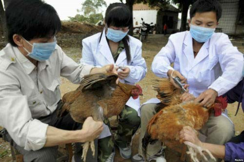 Lao Cai, Lang Son work to prevent cross-border avian flu hinh anh 1