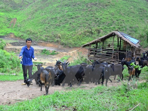 Lai Chau's Muong Te district improves local lives with WB funding hinh anh 1