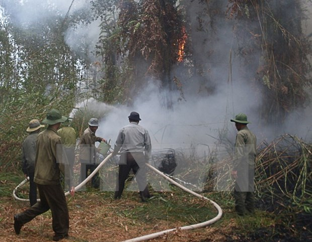 Central Highlands region works to prevent dry-season forest fire hinh anh 1