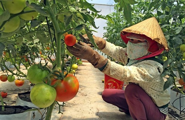 Farming start-ups need more help hinh anh 1
