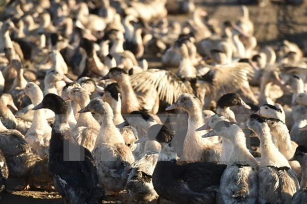 PM calls for combined effort to fight bird flu hinh anh 1