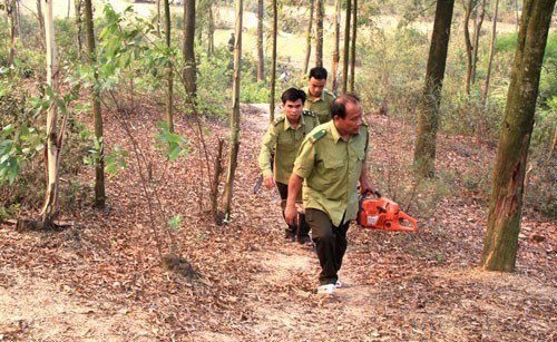 Ministry orders expanded forest-fire protection in dry season hinh anh 1
