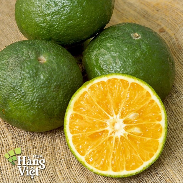 Opportunity arises for orange exports to Indonesia hinh anh 1