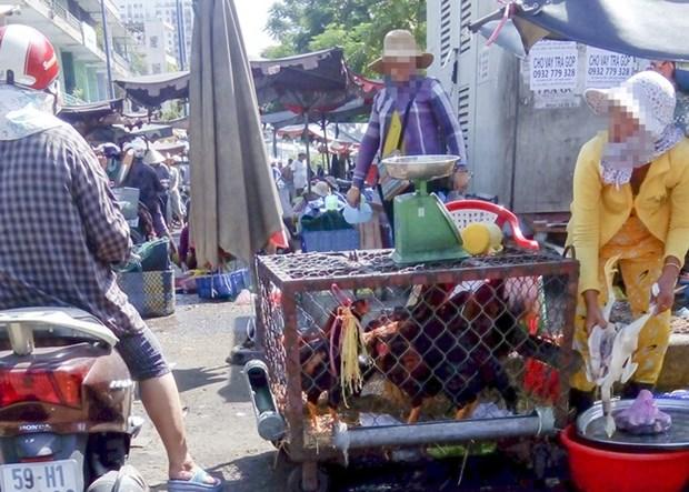 HCM City on alert against bird flu outbreaks hinh anh 1