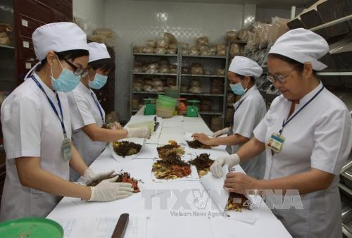 Health Ministry works to increase use of traditional medicine hinh anh 1