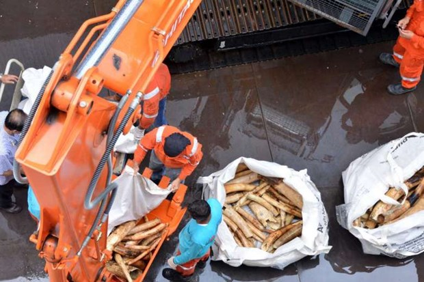 Singapore considers ban on ivory sale hinh anh 1
