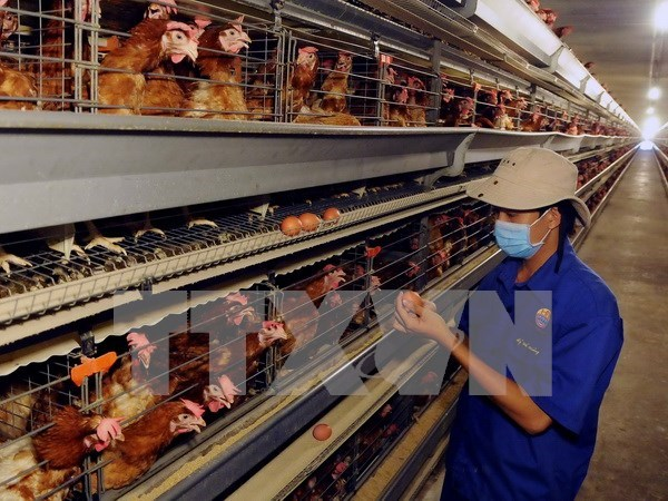 Health official alerts potential human bird flu infections hinh anh 1