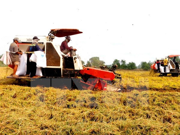 Tien Giang restructures agricultural production hinh anh 1