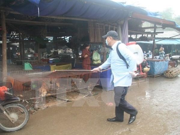 Cao Bang seizes smuggled chickens from China hinh anh 1