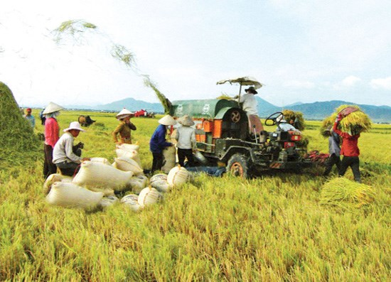 Nghe An strives to have 225 new-style rural communes by 2020 hinh anh 1