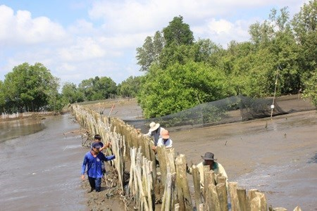 Ben Tre grapples with drought, saltwater intrusion hinh anh 1