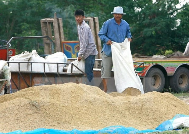Thailand sells 1 million tonnes of rice at first bidding hinh anh 1