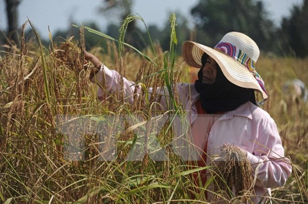 Thailand aims to export 10 million tonnes of rice in 2017 hinh anh 1