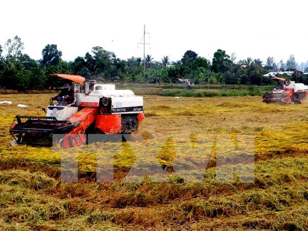 Mekong Delta farmers to be trained in sustainable rice cultivation hinh anh 1