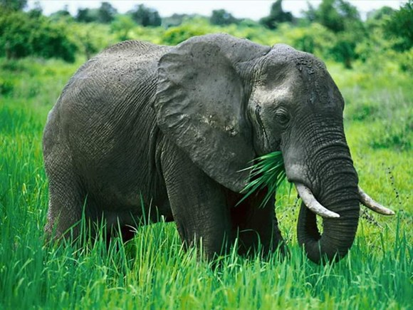 Quang Nam: over 5.6 mln USD for elephant conservation project hinh anh 1