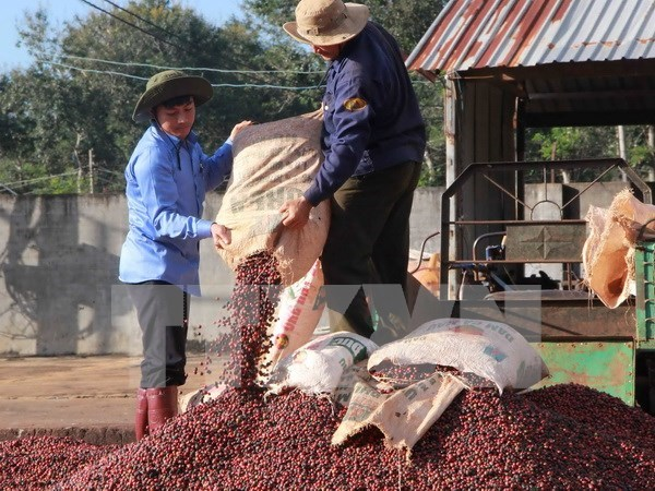"Dak Lak strives to gain global recognition for ""Buon Ma Thuot Coffee"" hinh anh 1"