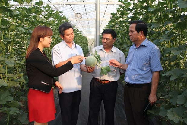 Central Highlands' high-tech agriculture development faces challenges hinh anh 1
