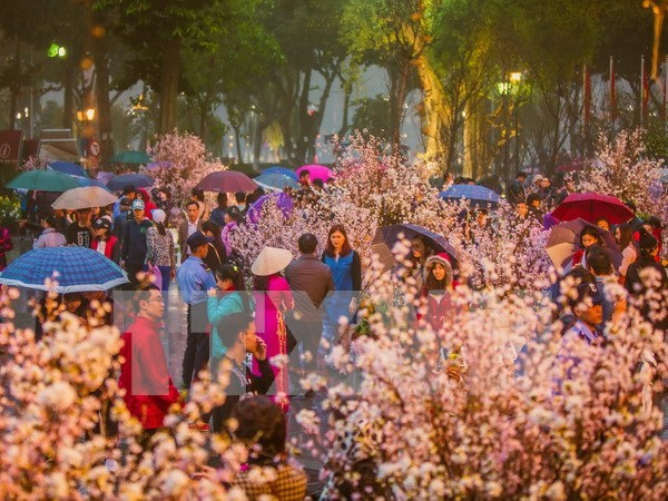 NA leader visits cherry blossom in Hanoi hinh anh 1