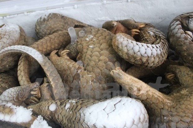 USAID supports Vietnam to fight wildlife smuggling hinh anh 1