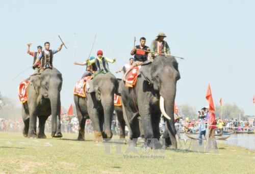 Elephant, boat races held in Buon Ma Thuot coffee festival hinh anh 1