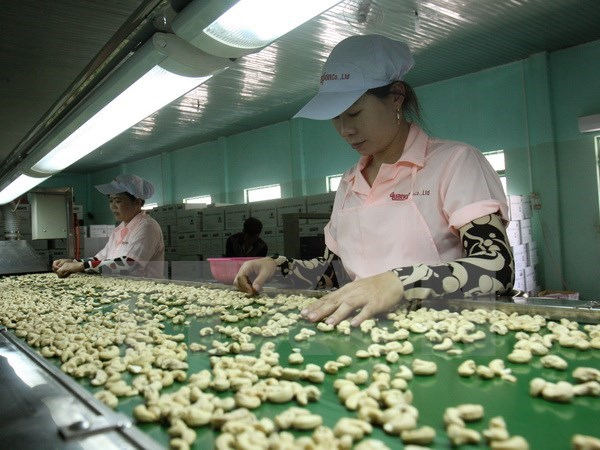 Cashew export falls in first two months hinh anh 1