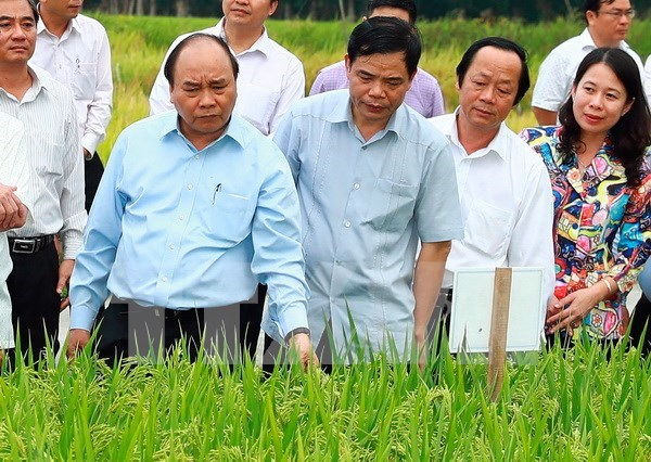 An Giang asked to improve food products for export hinh anh 1