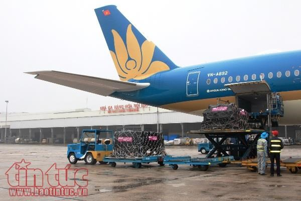 Airbus, Vietnam Airlines provide transport of medical equipment hinh anh 1